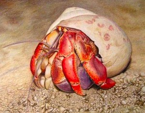 Hermit Crab - Colored Pencil