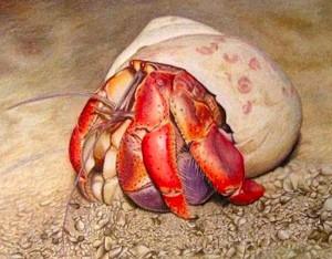Hermit Crab - Colored Pencil